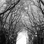Korony drzew na Cmentarzu Centralnym